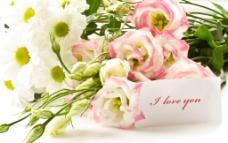 高清鲜花大图图片