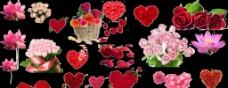 漂亮的玫瑰花集合图片