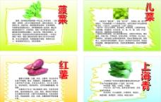 幼儿蔬菜介绍图片