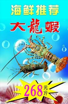 澳洲大龙虾图片