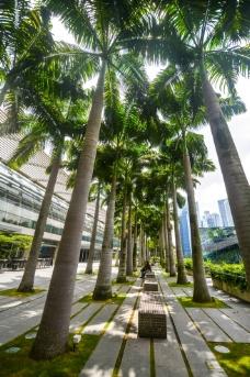 新加坡公园图片