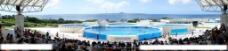 海豚表演馆全景图片