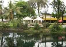 热带泉水小溪图片