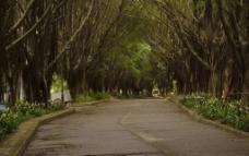 公园园林摄影图片