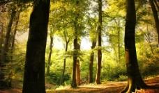 林间阳光图片