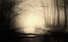 幽暗的树林小河图片