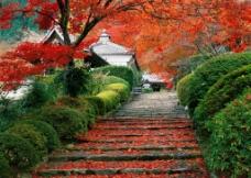 枫叶中的古建筑图片