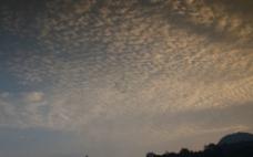 鱼磷云图片