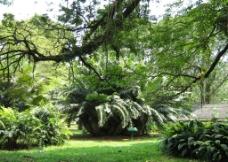 非洲热带植物图片
