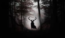 麋鹿剪影图片