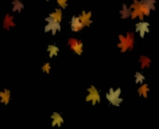树叶动态视频