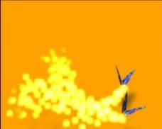 蝴蝶动态视频