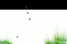 小草蜻蜓視頻