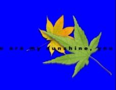 转动树叶视频