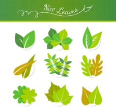 精致树叶图片