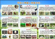 科技小种植小养殖图片