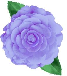 定位花型一朵玫瑰图片