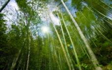 木坑竹海图片