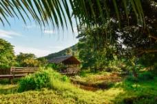 雨林木屋图片