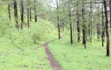 林中小路图片