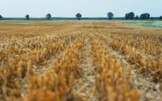 收割后的农田图片