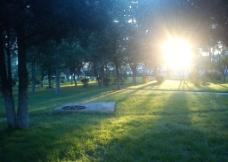 松树草地日落图片
