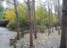 秋日公园图片