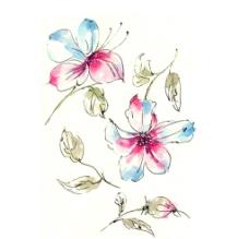 水彩 花卉图片