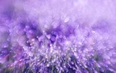 时尚紫色花朵背景图片