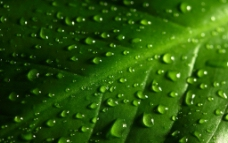 树叶绿色背景图片