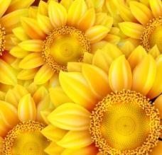 金色向日葵 无缝 背景图片