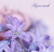 紫色花朵背景图片
