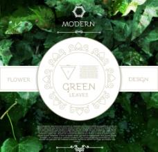 绿叶植物 背景图片