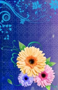 蓝底菊花图片