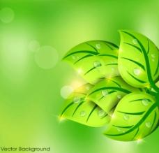 绿色树叶 植物图片