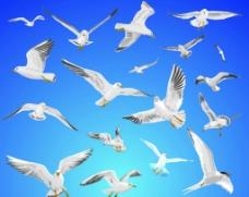 各种鸽子图片