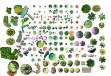 彩色平面植物素材图片