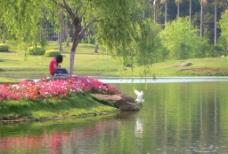 美丽芙蓉湖图片