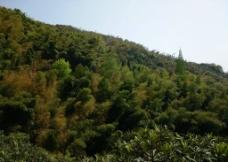 大山竹林图片