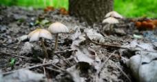 山中蘑菇图片