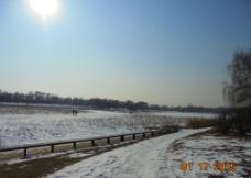 冬日 荷塘图片
