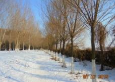 冬日 白雪图片