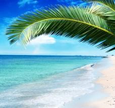 海滩椰树图片