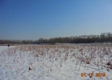 冬日 白雪 荷塘图片