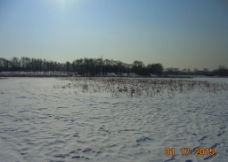 冬天 白雪图片