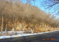 冬日 马路图片