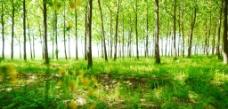 青春之林图片