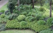 小区内的植物图片