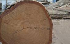 圆木纹理图片