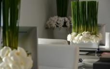 办公室 植物 高端 商务图片
